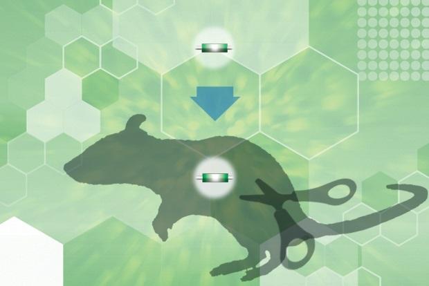 GenomeCraftシリーズ 一本鎖DNA作製