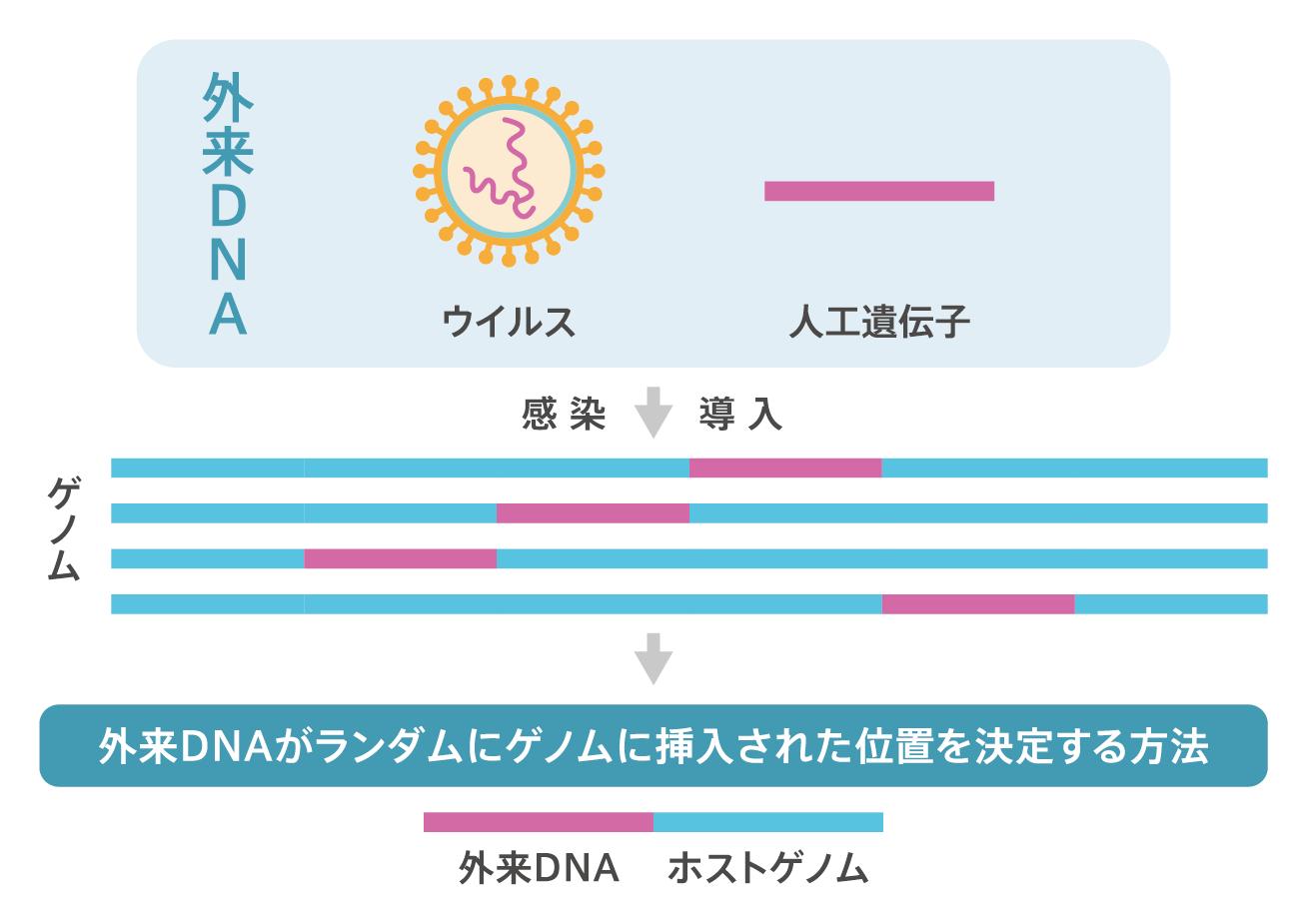 組み換え 遺伝子 ゲノム 違い 編集