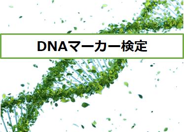 DNAマーカー検定